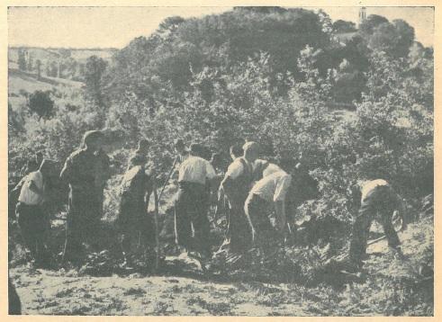 Ka ovom mjestu, na uzvisini zvanoj Glavica na Pašincu kod Priedora, pronađene su četiri masovna grobišta. Slika prikazuje početak iskapanja mrtvih tijela.