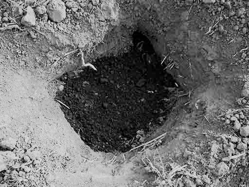 Živo dijete zakopao u jamu s đubrem