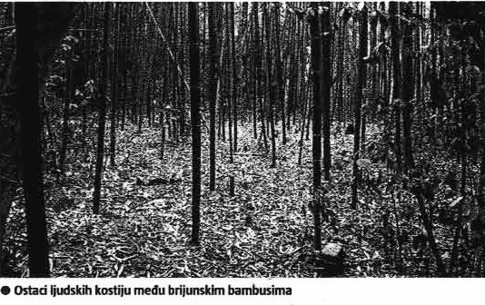 Ostaci ljudskih kostiju među brijunsklim bambusima